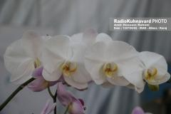www.radiokuhnavard.ir9586486-10