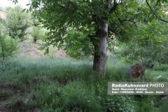 www.radiokuhnavard.ir9534564-22