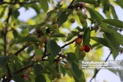 www.radiokuhnavard.ir9534564-34