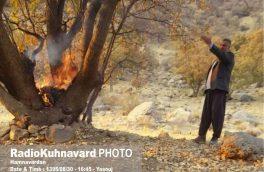 درخت کهنسال به آتش کشیده شد