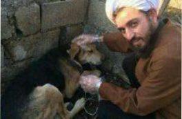 طلبه جوان سفیر مهر حیوانات شد
