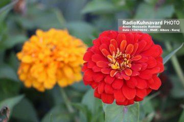 گزارش تصویری | پارک گلهای چمران باری دیگر بر روی شهروندان گشوده شد
